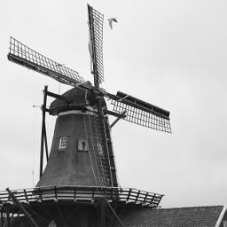 retro blackandwhite photography holland netherlands freetoedit
