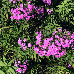 freetoedit interesting flowers trailrunning minnesota