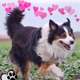 dogs cute adorable iloveit doggy freetoedit