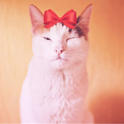 irccatday catday freetoedit