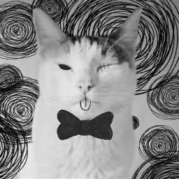 irccatday catday cat blackandwhite whiskers freetoedit