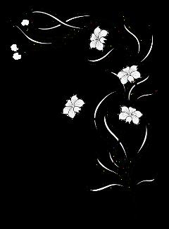freetoedit sticker stickers flowers blumen schwarzwei