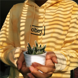 freetoedit obey yellow yellowaesthetic nature