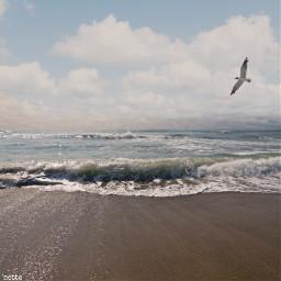 pcworldphotoday worldphotoday freetoedit seagullinflight atlanticocean