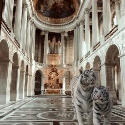 freetoedit tigre palace albino