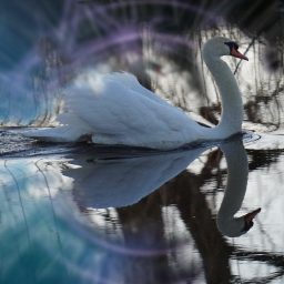 nature swan abstraction overlay freetoedit