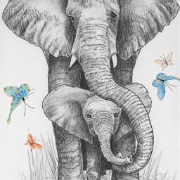 elephant sketch blackandwhite animals ilikethispicture freetoedit