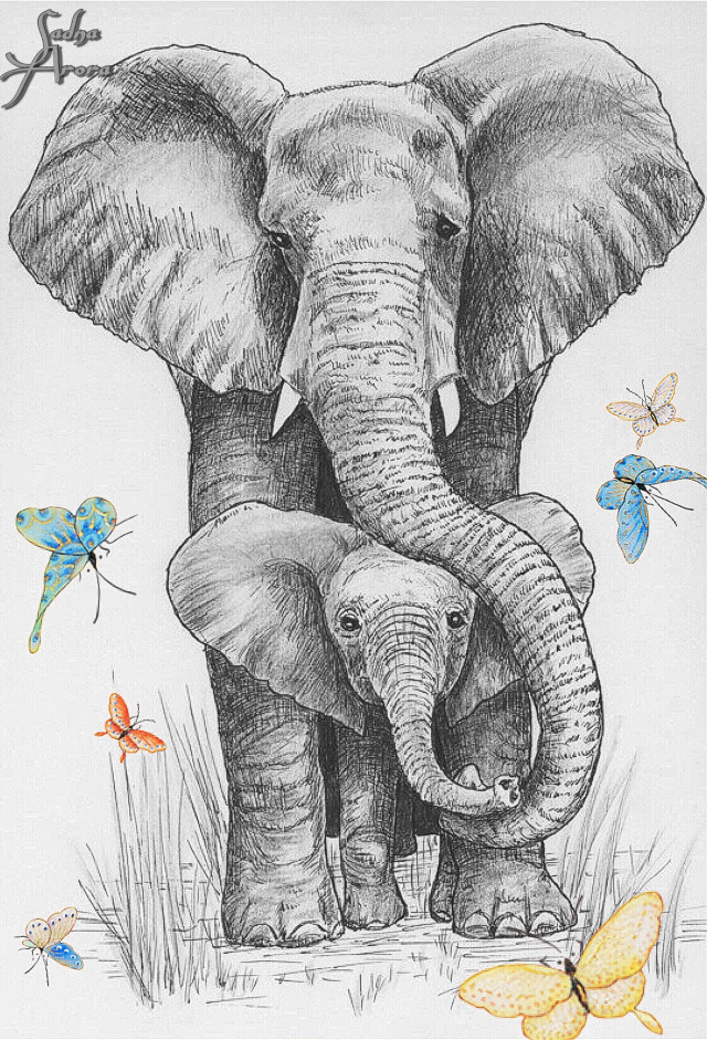 #elephant #sketch #blackandwhite #animals #ilikethispicture #butterflys by @sadna2018 #freetoedit
