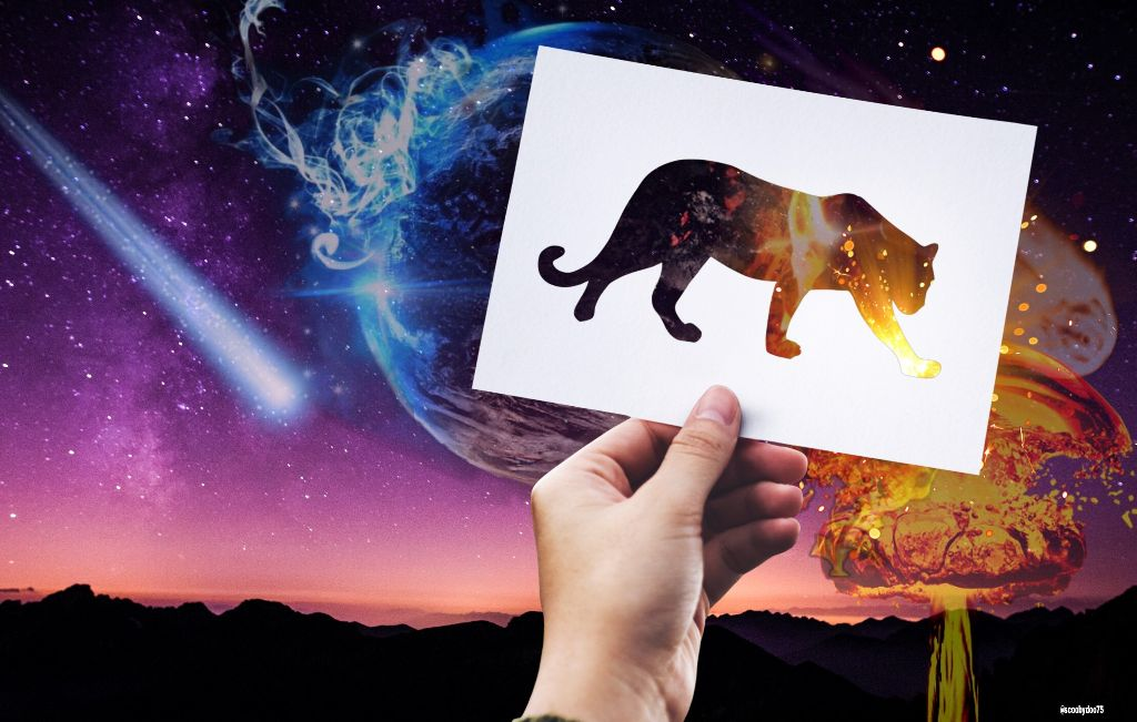 #freetoedit #Cat #interesting #remixit