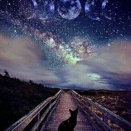 freetoedit cat sky night moon
