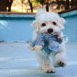 dog puppy toy pet freetoedit
