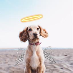 ircdogday dogday freetoedit