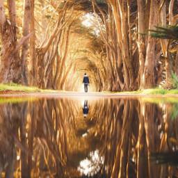 path tunnel trees freetoedit