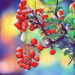 floramagiceffect berries pyracantha myphoto freetoedit