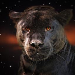 freetoedit nebula panther stars eyes