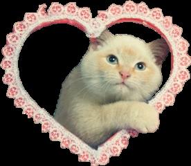 sticker stickerremix kitty hello kittycat freetoedit