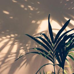 plant shadow freetoedit
