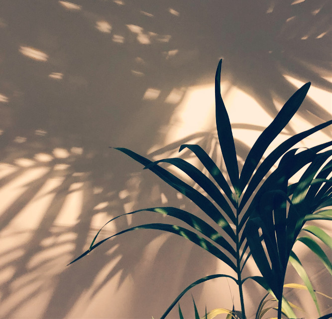 A #plant and its #shadow above. #freetoedit