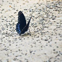 butterfly pcasingleitem asingleitem freetoedit