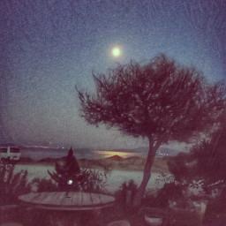 moon garden moonlight