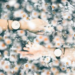 hand watch flower myworld photoshop
