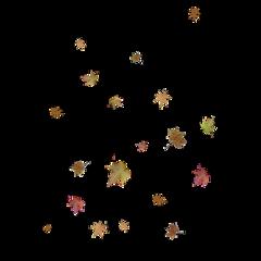 fall leaves season izaandelle leli