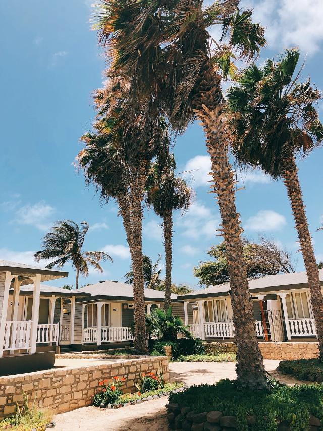 Happy Saturday ☀️                                                            #freetoedit  #summertime #brightsunnyday #smallvillagebythebeach #houses #architecture #plantsandflowers #palmtrees #warmweather #blueskyandclouds #windy #summervibes