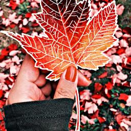freetoedit hellofall otoño walpaper remixit