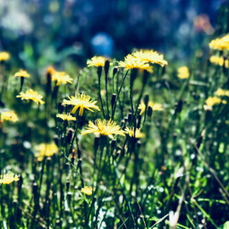 september2018 autumn photooftheday photo nature pcflowerpower freetoedit