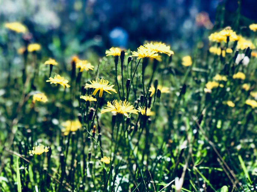 #september2018 #autumn #photooftheday #photo #nature #flowers #flowerphotography #freetoedit