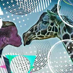 freetoedit giraffe kiss truelove love ircdarlinggiraffe