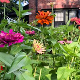 pcflowerpower flowerpower freetoedit floralbackground floralcanvas