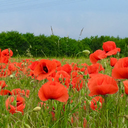 pcflowerpower flowerpower pcnaturephotography naturephotography pcthebestplace pcrollingfields rollingfields