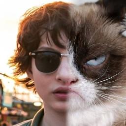 grumpyfinn grumpycat cat actor finn