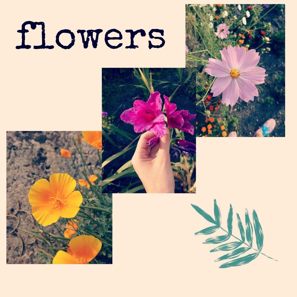 #freetoedit #flowers #nature #цветы #коллаж #нежность #природа