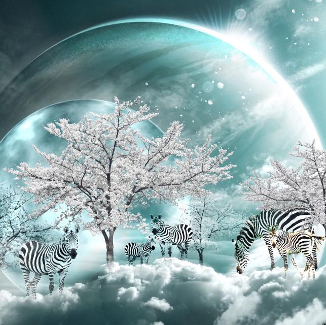 🦓🦓 #freetoedit #fantasy #surreal #peaceful #zebra #inthesky