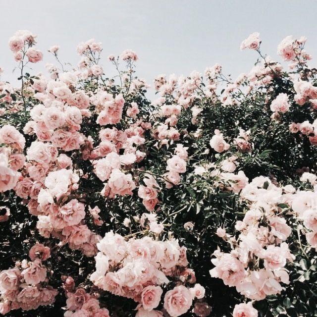 Flower Background Aesthetic Hd