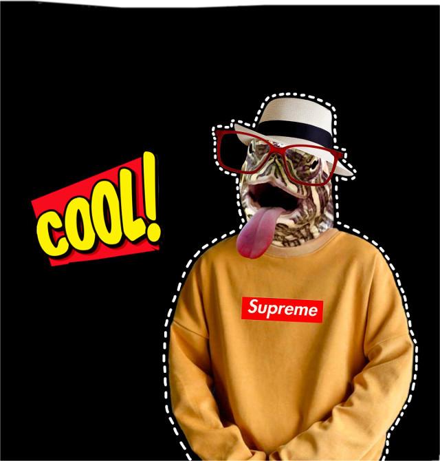 #freetoedit #turtle #supreme #funny #cool