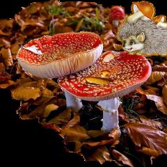 freetoedit scmushroom mushroom
