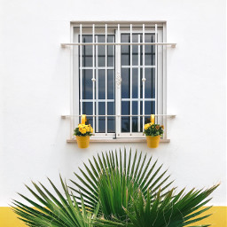 freetoedit housewall window ironprotection pottedplants