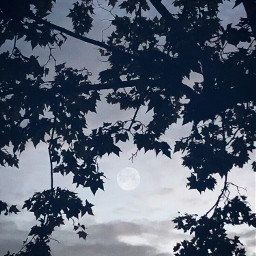 freetoedit nature leaf shadow silhouette moon monochrome