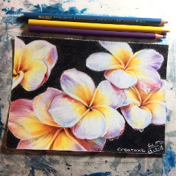art drawing flower plumeria