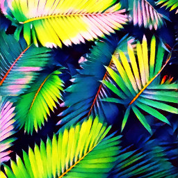freetoedit colorbrightmagiceffect polygoneffect palmleaves