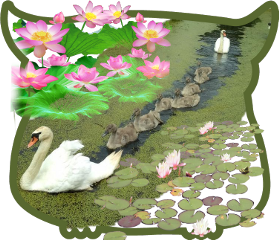 freetoedit scswan swan