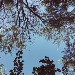 trees sky fall photography afternoon
