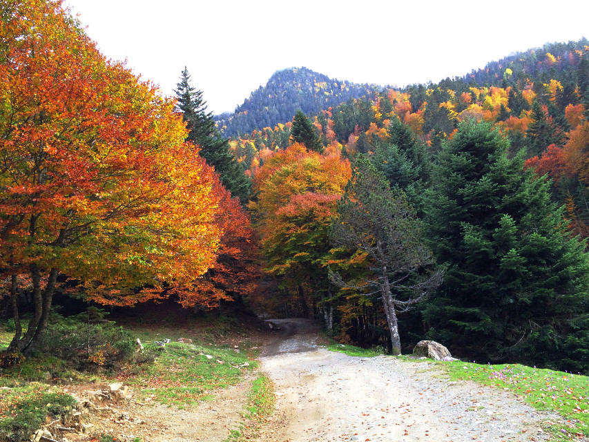 #photography #nature #autumn #pyrenees #mountains #forest #road #trees #france #travel #freetoedit