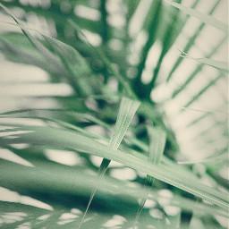 freetoedit nature palmleaves softness mellow