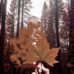 freetoedit artwork_by_sahrish pakistani leaf myedit