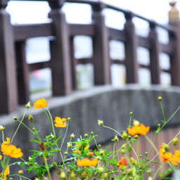 freetoedit japan photography cosmos canon