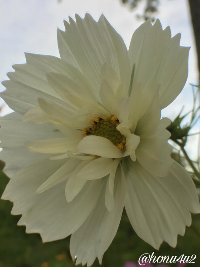#interesting #nature #mygardenflower #myflowerpatch #white #macro#fall#mylife❤️#mydays#norway